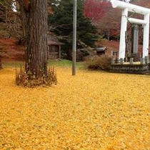 【秋】黄色い絨毯!土津神社