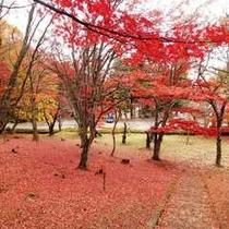【秋】真っ赤な絨毯!土津神社