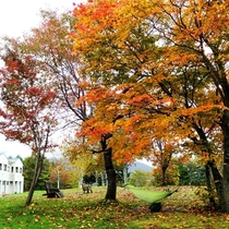 秋の贅沢~紅葉の木を見上げながら寛ぐハンモック~