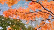 【秋】真っ赤に染まり始める楓