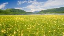【6月下旬~7月上旬】ニッコウキスゲの黄色い絨毯「雄国沼」
