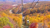 【秋】ロープウェイから眺める紅葉の大パノラマ