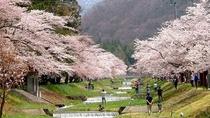 【4月末~GW】約1km続く桜回廊「観音寺川の桜並木」