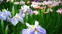 【6月中下旬】東北随一を誇る「伊佐須美神社のあやめ祭り」