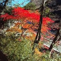 【秋の景色】色々な色に染まる秋の紅葉をお楽しみ下さい。