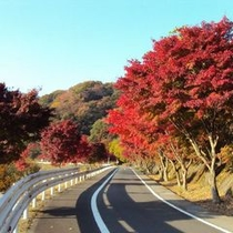 【秋の景色】ドライブで紅葉を楽しんで下さい。天然の動物に出会えるかもしれませんよ。