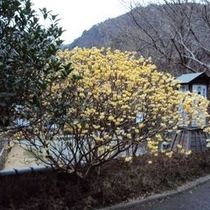 【冬の景色】御宿の前の景色。季節によって表情を変えます。