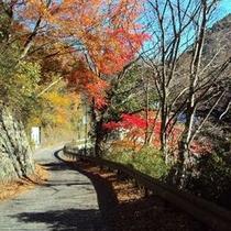 【秋の景色】ご夫婦で散策しながら秋の紅葉を楽しんではいかかですか?