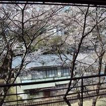 【春の景色】桜を見て爽やかな気持ちになり、明日への活力に繋げて頂きたいです。