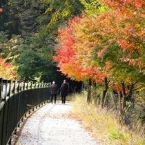 【秋の景色】丹沢湖周辺の紅葉は格別です。是非、一度見に来て頂きたいです。