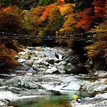 【秋の景色】川のせせらぎを聞きながら紅葉を観賞してはいかがですか?