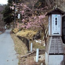 【外観・館内情報】手つかずの自然が今もたくさん残る西丹沢・中川温泉