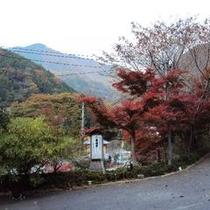 【秋の景色】宿からも素敵な景色を見る事が出来ますよ。