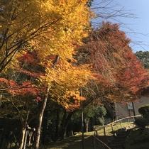 【庭の中道】日本庭園へと続く石段と紅葉