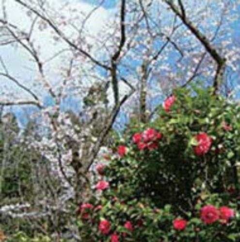 加茂山雪椿園