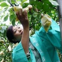 女将&梅の木