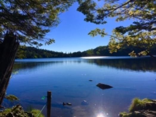【北八ヶ岳・山歩きプラン】原生林に囲まれた白駒池の苔の森や白樺の群生林を散策/ご希望者におにぎりも!