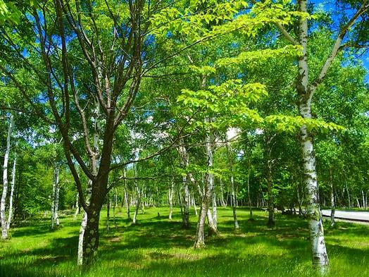 【猛暑脱出!夏プラン】標高1450mはクーラー要らずの涼しさと静かさで癒しの夏休み・高原野菜に温泉!