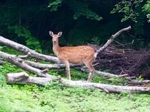 森の住人1