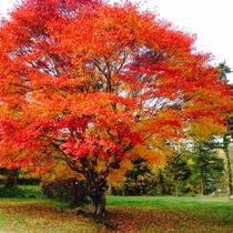 松原湖湖畔の紅葉