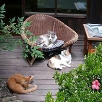 ■猫ちゃんたちが集まる昼下がりの本館角上楼中庭