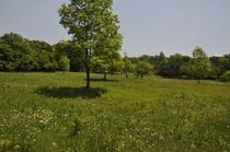 ペンション脇にある牧草畑