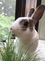 ウサギのゴマ