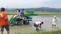 減農薬米の田植え風景