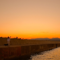 【お散歩コース】泊浜堤防、わんちゃん同伴のお客様におすすめの、お散歩コースです