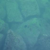 【長須賀海水浴場】うにも見られます