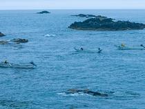早朝 漁師がウニ漁を行います