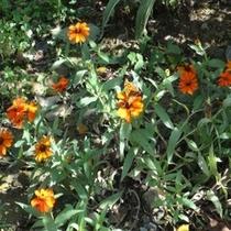 季節のお花②