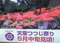 つつじ公園⇒ホテルより徒歩10分★一面が赤、ピンク、黄色のつつじが綺麗♪建勲神社すぐ横