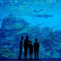 うみのもり水族館