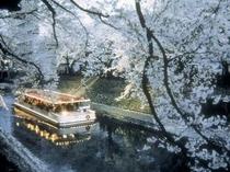 松川縁の桜
