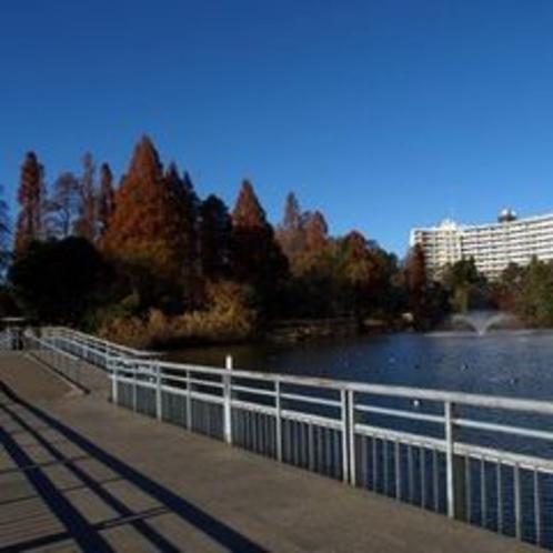 秋の井の頭池と七井橋