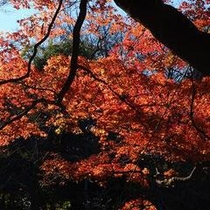 井の頭公園 木々の紅葉