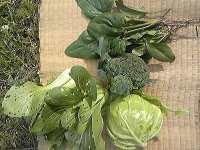 畑で採れた野菜