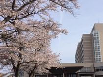 今年の桜はいつ頃になるでしょうか(昨年4月20日撮影)