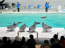 【小樽水族館】楽しい海の仲間が待ってるよ♪