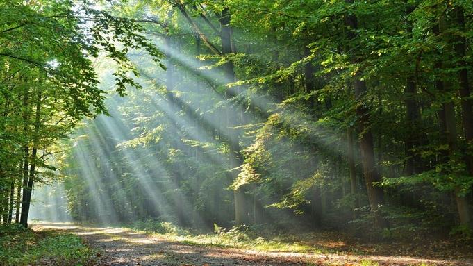 【一人旅応援】大自然の中での森林浴で疲れた身体をリフレッシュ!星空や温泉で癒されて<四季・遊>