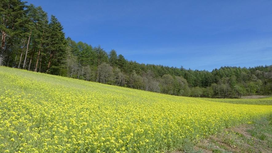 「中山高原」春には一面に菜の花が広がります。NHK朝ドラロケ地