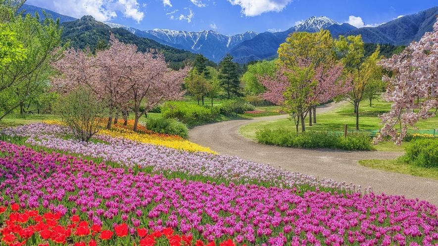 白馬五竜高山植物園。季節折々の花々をお楽しみ頂けます。