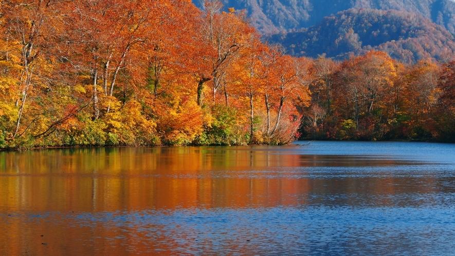 大自然に囲まれた信州ならではの秋の景色