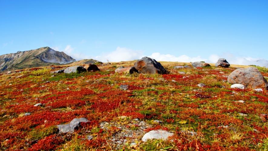 秋の室堂平より。立山黒部アルペンルートには早い秋をお愉しみ頂けます。