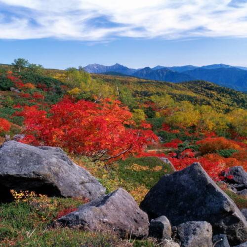 乗鞍岳 位ヶ原周辺の紅葉