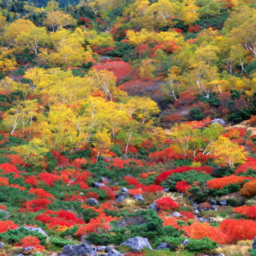 乗鞍岳・位ヶ原周辺の紅葉