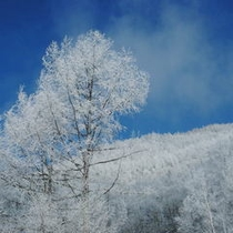 真冬に木々に白い花が咲く