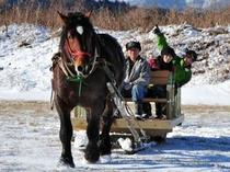 冬の馬そり
