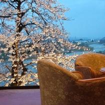 ■よし乃亭ロビー脇の桜